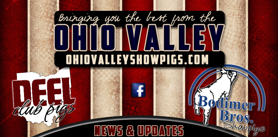 Ohio Valley Show Pigs - Bringing you the best from the Ohio Valley!
